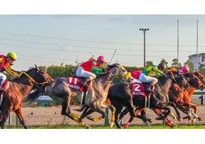 新潟2歳S(G3)で「新種牡馬3頭」の期待馬が激突!激しい生存競争を生き残るため「最重要」のマイル重賞を手にする種牡馬は......