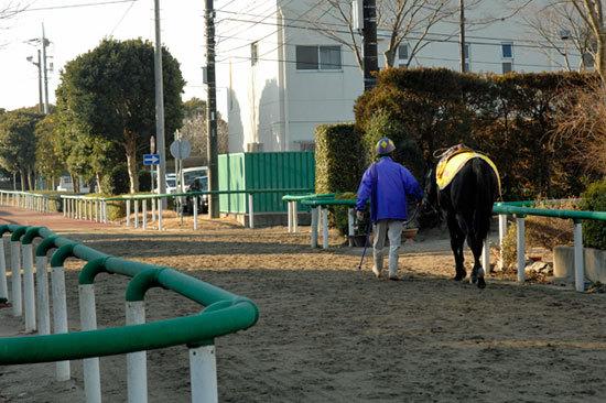 現役引退・黒田博樹投手擁する広島もなで斬り!? 球界の至宝・大谷翔平が昨年オフに訪れた「五冠の名馬」の場所?