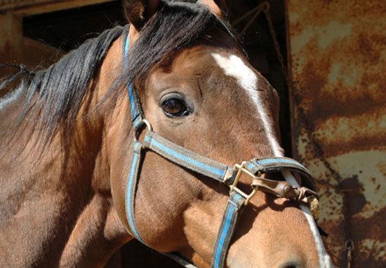 ビートたけしが「凱旋門賞馬」ゴッドファーザーに!? 夢膨らむその名は、自身の「勲章」