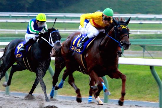 【東京大賞典(G1)展望】北島三郎・キタサンブラックの次はDr.コパ・コパノリッキー!? 「引退馬大活躍」で夢の「G1・11勝」確定かの画像1