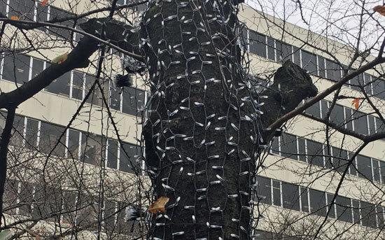 中目黒の桜を「寄生虫」「未確認生物」が侵食!? 怖がり編集長が思わずギョッとした怪現象の正体【GJ編集長の独り言】の画像1