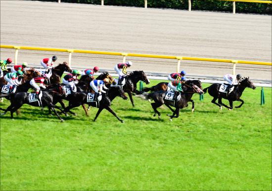 佐々木主浩氏ヴィブロスなど「G1級メンバー」が府中牝馬S(G2)に集結! 超一流の中距離馬とマイラーが激突する「1800m」のG1昇格は?