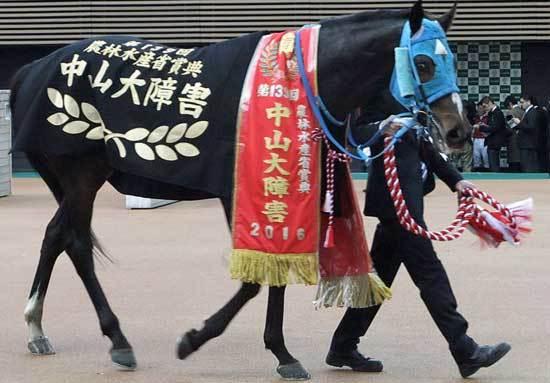 JRA最強障害馬オジュウチョウサンいよいよ平地挑戦! オーナーの思いが歴史を変える?の画像1