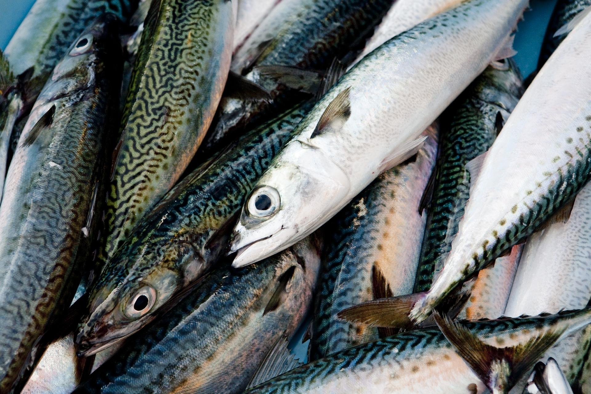 青魚などに含まれる「オメガ3脂肪酸」は、アルツハイマー病治療の救世主になる?