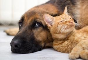 ペットを飼うのは動物虐待ではないか?自由を奪い、飼い主の勝手な都合で放り出し殺処分の画像1