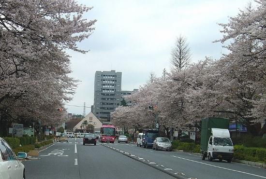 元国立市長、行政運営めぐり3千万円の賠償金支払い命令…景観保護は営業妨害?