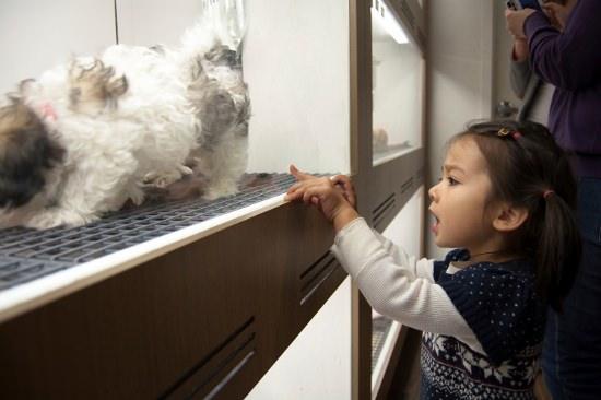 ペット用犬を狭いケージで糞尿処理せず乱繁殖、ショップで売れ残りは廃棄…ペット業界の闇の画像1