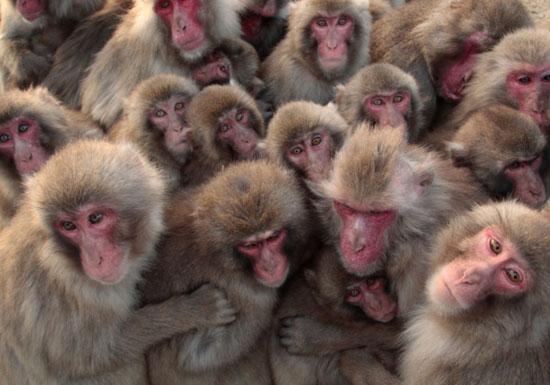 アップル、ただの猿マネ企業?中国のディズニー「パクリ」テーマパークは極めて優れているの画像1