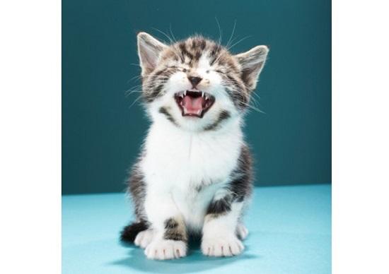 「バカじゃないの!」…中山美穂、仕事激減&問題行動連発で事務所も激怒&愛想尽かすの画像1