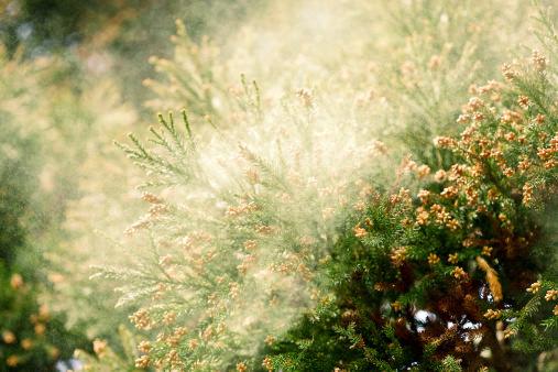 つらい花粉症、こうすれば劇的に治る!これを飲むべき!余分な水分摂取はNGの画像1