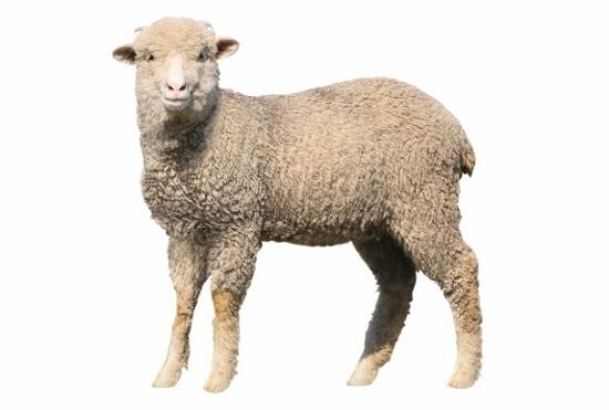 吉田羊、芸能界を干される危機か…ジャニーズ共演の仕事はすべてNGか