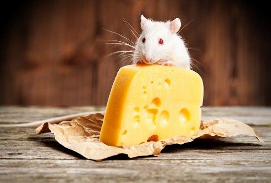 食品添加物、安全性試験は動物試験のみ!ネズミの試験で人間での安全性は評価不可能