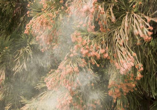花粉症にはヨーグルトと洗顔が劇的効果?知られざる「良く効く」解消法はこれだ!
