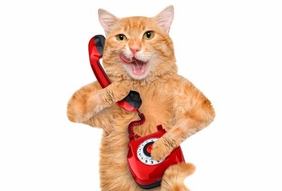 モー娘。全盛だったあの時代、あの人気タレントは事務所の電話番や事務作業までやらされていた