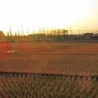 株価で分かるTPPの脅威 国内の農林水産物生産額が3兆円マイナス 農業関連銘柄も軒並みダウン!?