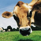 「石垣牛」「アグー豚」ブランドを独占するJAの闇 日本の農業を阻害?
