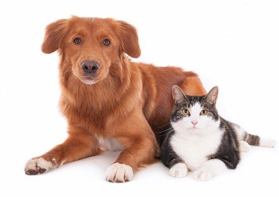 高齢ペットの介護問題が深刻化…追い詰められる飼い主、老犬ホームの利用急増の画像1