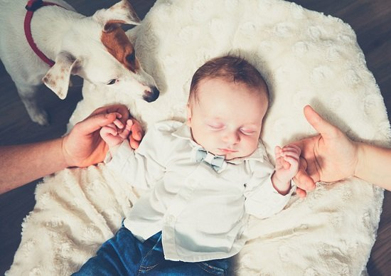 飼い犬が赤ちゃん咬み殺し…赤ちゃんいる家で犬買うのは危険?原因は間違った飼い方?