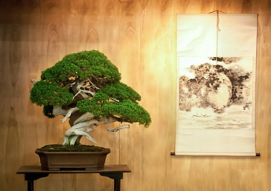 うどん県・香川、今度は「盆栽県」で世界進出始動…ガールズユニット「ボンクラ」結成の画像1