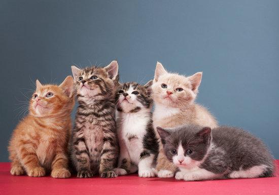 ペットとのスキンシップで脳に炎症など致死率の高い病気の危険
