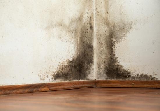 冬の室内はカビだらけ!過剰な加湿などのNG行為リスト、防ぐには○○が効果的!