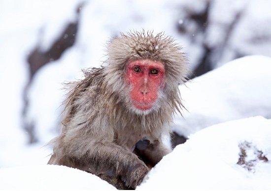 今冬の厳冬、日本経済に多大な恩...