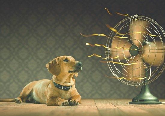 猛暑、8月も続く見通し…日本の夏、30~40年前より、こんなに暑くなっていた!の画像1