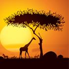 急成長遂げるアフリカ、大きく進出遅れる日本の勝算は? 進出加速させる日本企業の挑戦と課題