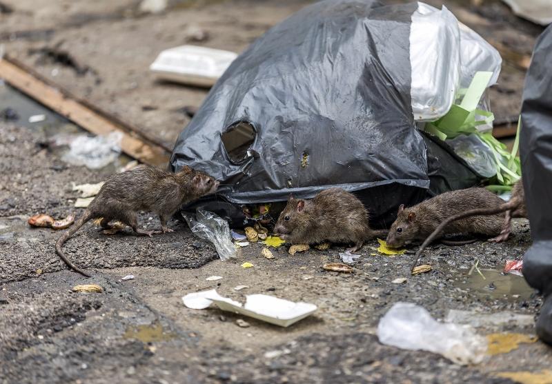 「特殊清掃業」の想像を絶する労働現場…孤独死、常軌を逸したゴミ屋敷