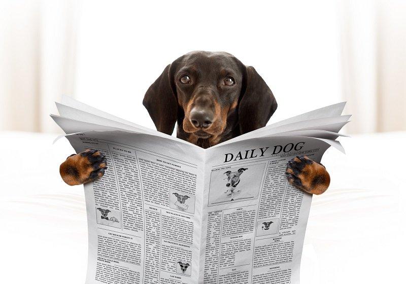"""新聞が""""薄く""""なり始めた?部数減&巨大な販売網維持コスト上昇でステルス値上げかの画像1"""