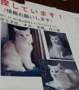 猫大量虐待?殺処分・遺棄横行か…動物実験や皮・肉の闇市場へ売却疑惑もの画像1