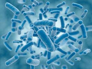 糞便移植で病気治癒?腸内細菌研究の衝撃 病気・肥満・認知症に多大な影響 の画像1