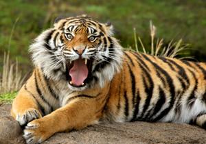 """""""アジアの虎""""香港ヘッジファンドに狙われた日本企業は、この3社!"""