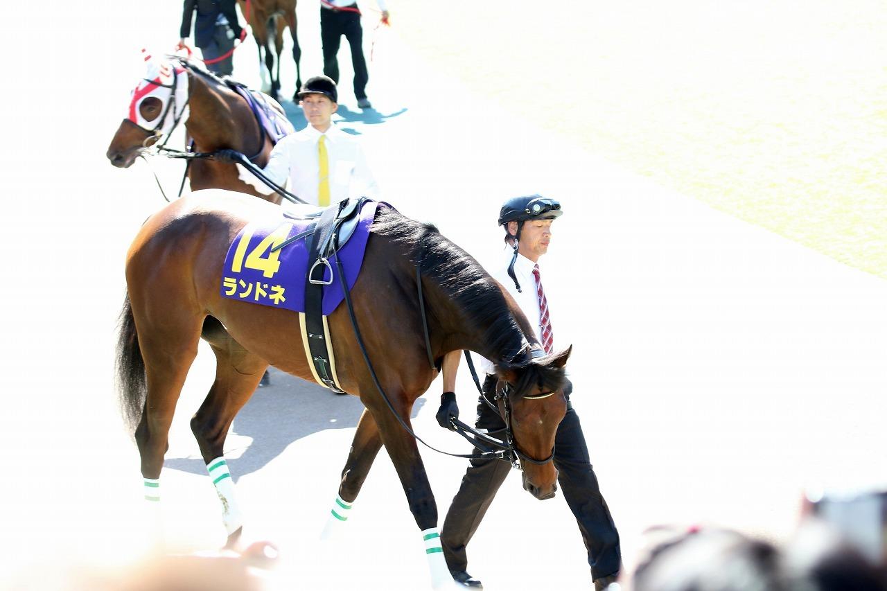 【愛知杯(G3)展望】古馬となっての飛躍を目指すノームコア始動!強い4歳世代は牝馬戦線でも中心になれるのか?