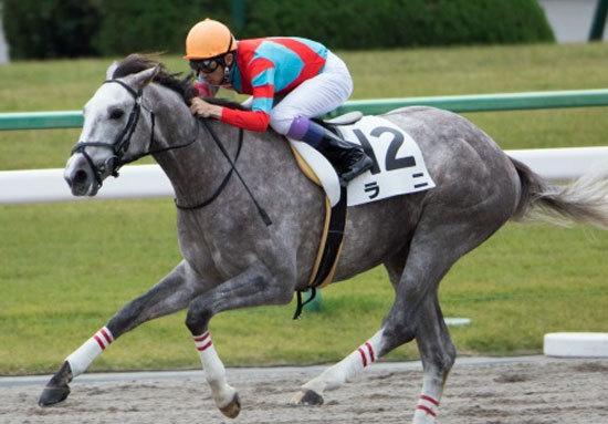 【徹底考察】みやこS(G3) ラニ「この馬は間違いなく偉大なチャレンジャーだ。だが、『日本』で本当に強いのか、それとも......」