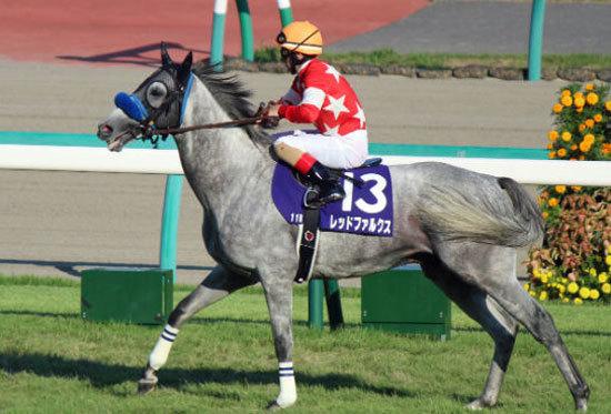 高松宮記念(G1)「香港馬」ブリザードを侮ることなかれ!? 課題の左回りを克服できる「2つの理由」と関東地方を襲った季節外れのサインの画像2