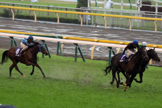 レインボーライン「圧倒的3着馬」がジャパンCは危険度強? 「過去実績」に見る「スタミナ」のあるなし