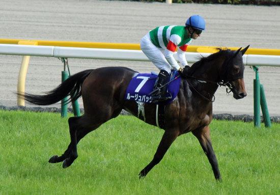 「強奪屋」戸崎圭太は何故ルージュバックだけ乗り続けるのか「エージェント制度の寵児」と謳われる3年連続リーディング騎手の「責任」と「信念」