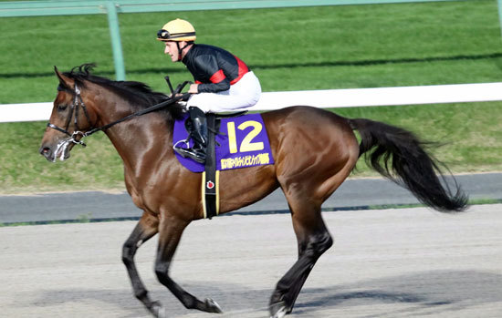 JRA年度代表馬候補へ!? 「化物」ルヴァンスレーヴが南部杯(G1)で最強古馬一蹴、夢はドバイの空へ羽ばたく?