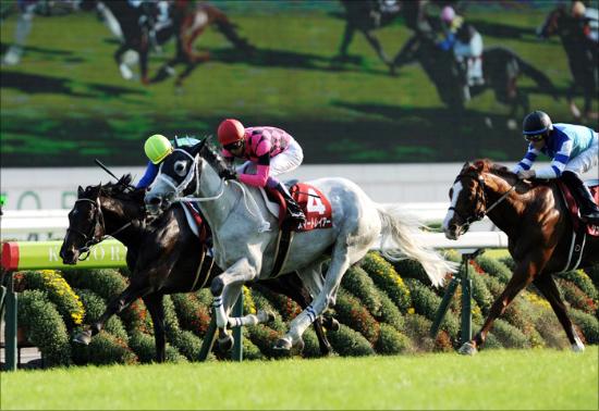 天皇賞・春(G1)スマートレイアー「史上初」偉業準備は整った!? 2年かけた「長距離牝馬」ここに完成か