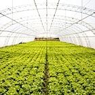 進化する農業〜ICT駆使したスマートアグリが、アベノミクス成長戦略のカギとなるか