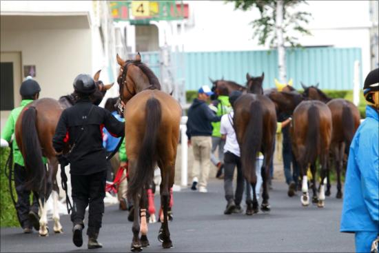 凱旋門賞馬ソットサスの評価が「21世紀最弱」レベル……JRAオ ...