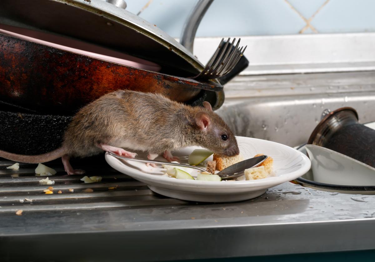 な 嫌い もの の ネズミ