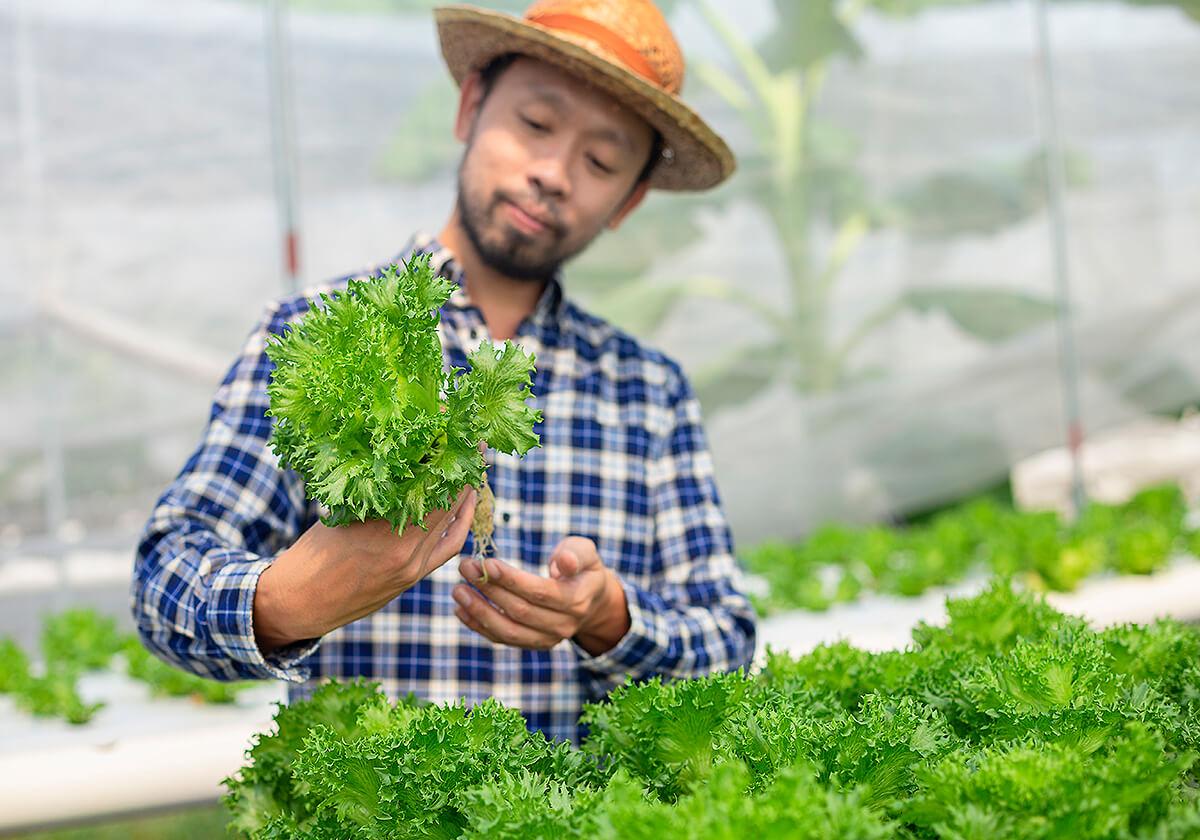 レタス、モロヘイヤ、クウシンサイ…旬を迎える葉物野菜のスゴい効能とは?の画像1